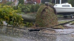 Storm topples trees, knocks out power