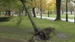 New Brunswick hit with rain, high winds