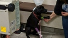 Charge laid after dog almost fatally poisoned