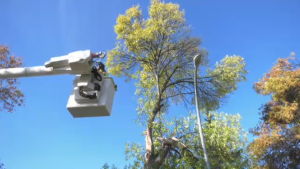 As crews in Winnipeg work to clear downed trees and branches caused by last week's snowstorm, the city is getting a helping hand from some of its neighbours to the west.