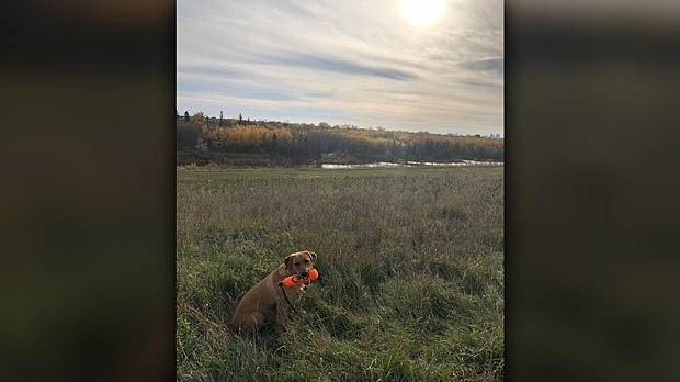 Layla enjoying the sunshine. Photo by Carolyn Rozmus.