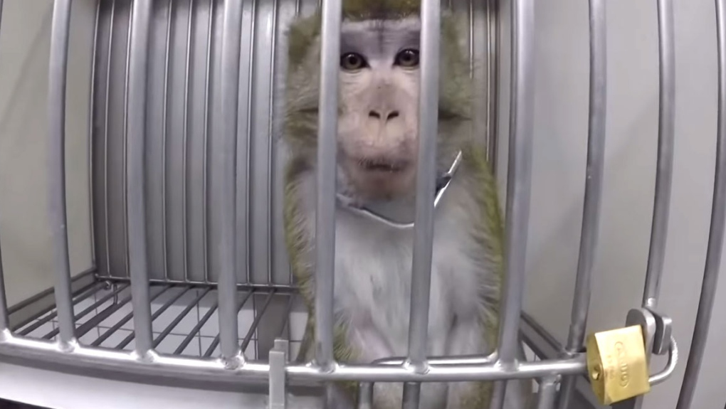 German lab investigated for 'cruel' treatment of animals during testing