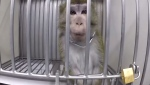 An animal testing laboratory is under investigation for its treatment of animals during testing. (Cruelty Free International)