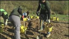 Tree Planting London