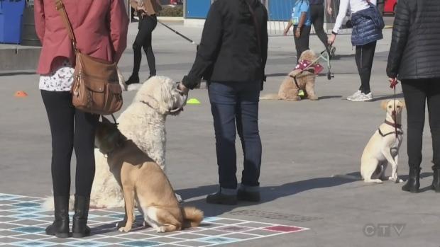 K-W Oktoberfest goes to the dogs