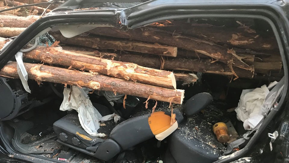 A Georgia driver made it out alive after he rear-ended a log truck. (Whitfield County Fire / Facebook)