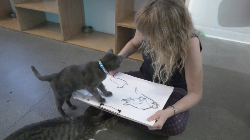 Cat and art enthusiasts participated in a drawing class with live models Tuesday night.