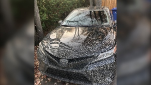 A new Toyota Camry, showered by liquid concrete beneath the Highway 40 REM construction site.