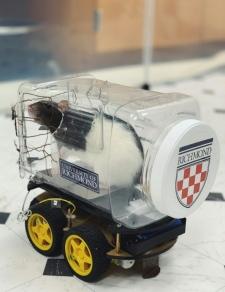rats driving tiny cars