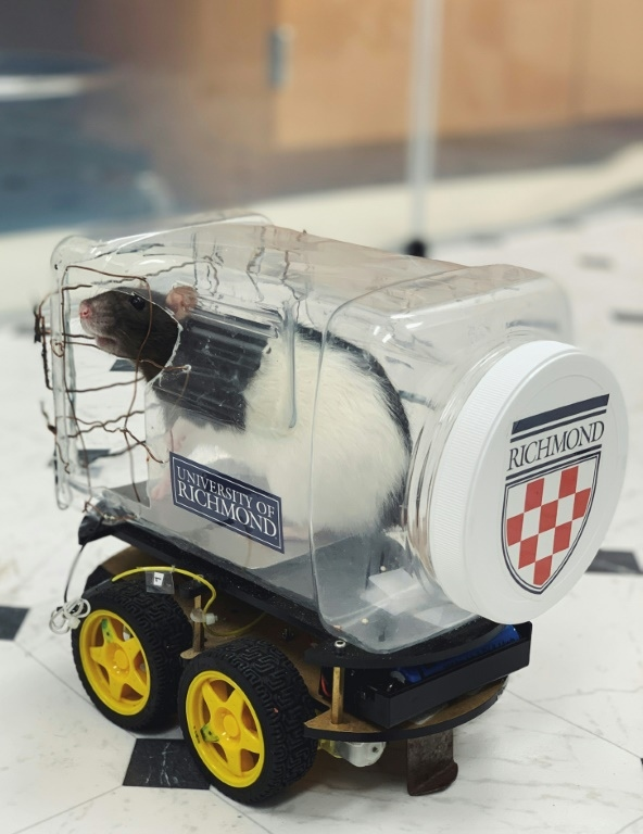 Scientists modified a robot car kit by adding a clear plastic food container to form a driver compartment with an aluminum plate placed on the bottom. (AFP)