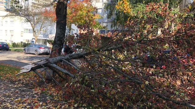 A large tree branch fell near Burnaby and Nicola Streets in Vancouver's West End during a wind storm.