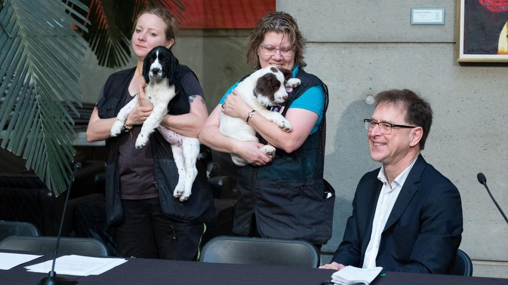 VCH Puppies