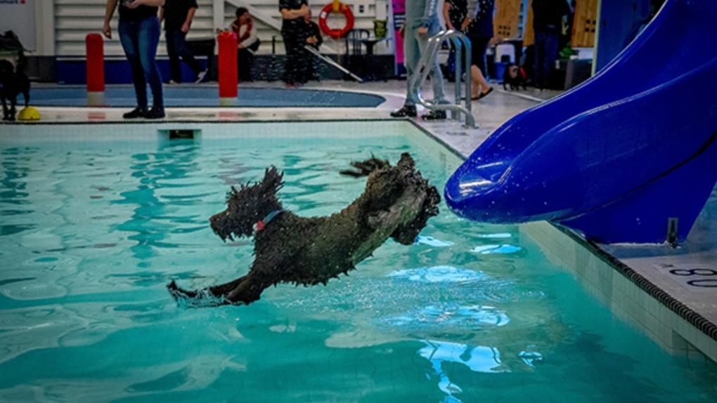dog swim esquimalt
