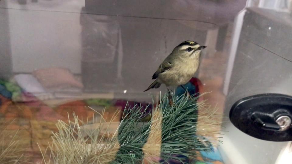 Calgary bird strikes