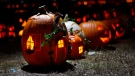 File image of Jack-o-lanterns (AP / Robert F. Bukaty).