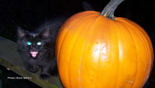 Our kitten Gina and the pumpkin. (Dave Sellers/CTV Viewer)