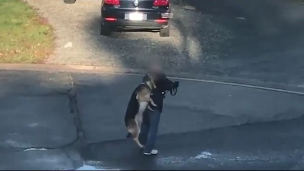Animal cruelty captured on video in Sudbury October 24, 2019 that resulted in the man being charged. (CTV Northern Ontario)