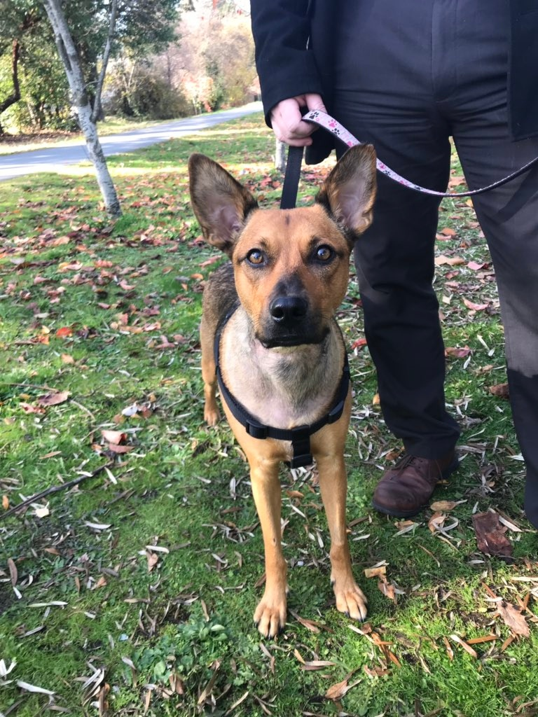 Hope is pictured on Oct. 31, 2019. (CTV Vancouver Island)