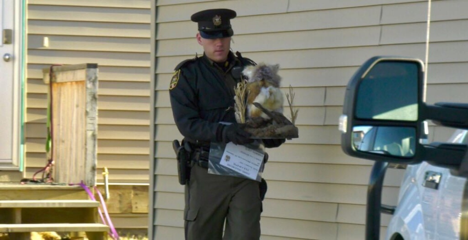 Taxidermied owl seized