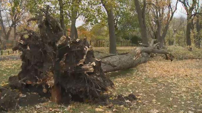 Quebec's Halloween rainstorm caused more than $189M in damages: CatIQ
