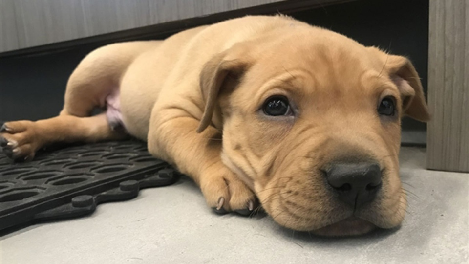 Puppies for adoption B.C.