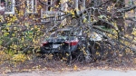 A car is shown covered with broken branches on a street in Montreal, Friday, November 1, 2019, as high winds batter the province leaving hundreds of thousands of people without power. THE CANADIAN PRESS/Graham Hughes