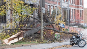 A large branch is shown strewn across a footpath on a street in Montreal, Friday, November 1, 2019, as high winds batter the province leaving hundreds of thousands of people without power. THE CANADIAN PRESS/Graham Hughes
