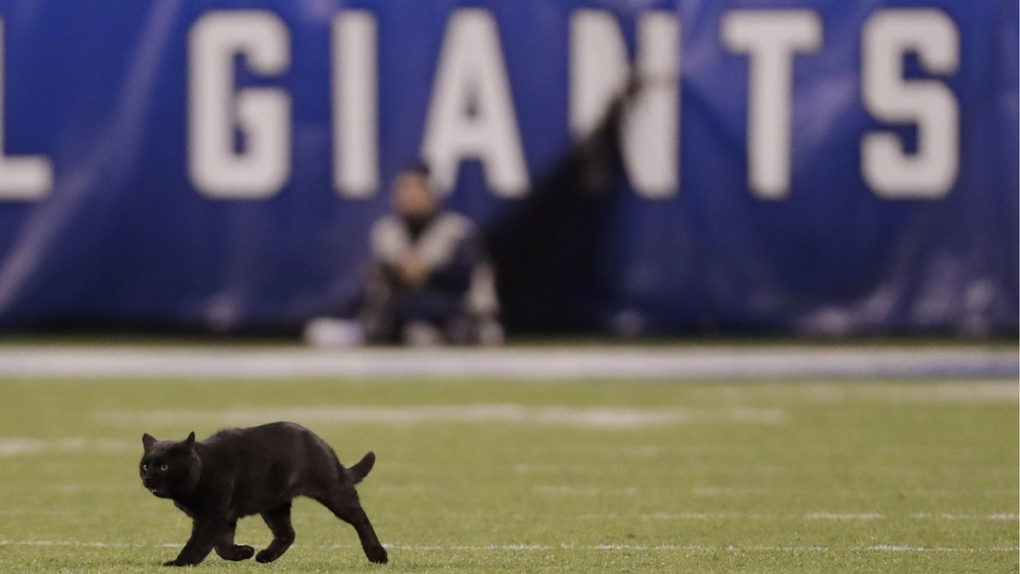 A cat runs on the field