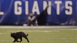 A cat runs on the field during the second quarter of an NFL football game between the New York Giants and the Dallas Cowboys in East Rutherford, N.J., on Nov. 4, 2019. (Adam Hunger / AP)