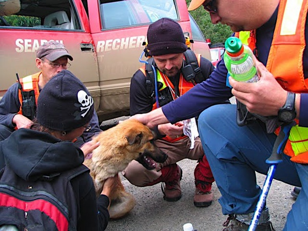 It is believed this dog helped keep a missing two-year-old warm so he could survive the chilly night.