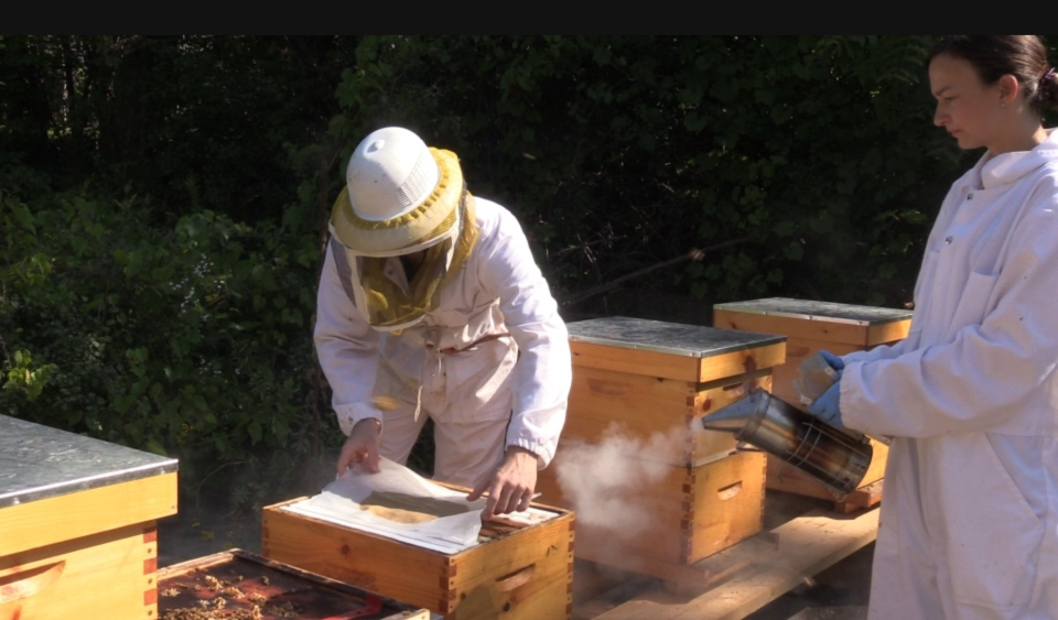 Research team puts probiotic bio-patty into hive