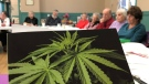The Prince Albert Senior Advocacy Centre recently hosted a workshop on cannabis. (Lisa Risom/CTV Prince Albert)