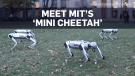 Mini Cheetah