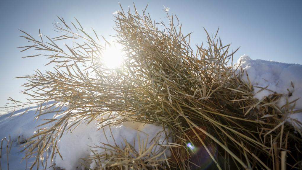 Canadian prairie harvest
