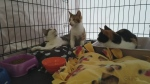 Furry Friend Adopt-a-thon