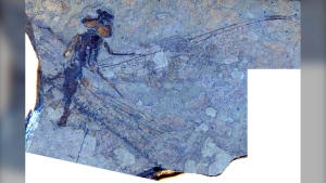 A fossilized dragonfly is shown in an image from SFU.ca.
