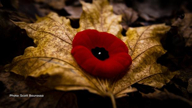 Remembrance Day 2019. (Scott Bourassa/CTV Viewer)