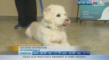 Adopt a Senior Pet Month at WHS