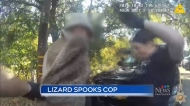 Strange surprise: Lizard leaps out during search