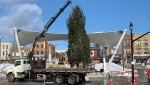 Christmas tree arrives at Meridian Place
