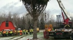 Nova Scotia tree begins journey to Boston