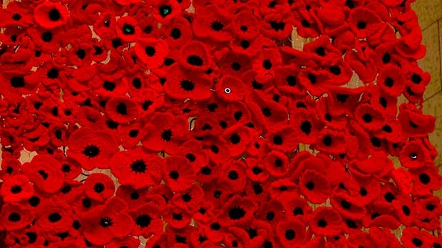 A blanket made of handmade poppies has made its way to the legislature after being featured on Remembrance Day. Photo by Scott Andersson/CTV News.