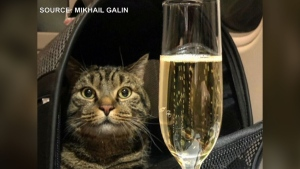 Cat swap costs man his frequent flyer miles