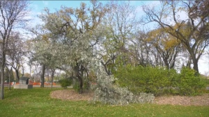 The City of Winnipeg temporarily closed Kildonan Park following the October storm.