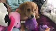 Trending: Puppy or unicorn – you decide