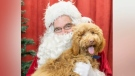 Pet of the Week: Santa Pet Pics fundraiser