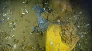 A blue plastic bag on the bottom of the Bay of Fundy in this undated handout photo. (THE CANADIAN PRESS/HO - Applied Oceans Research Group at the Nova Scotia Community College and Fisheries and Oceans Canada (DFO)