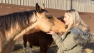 Meghan Senger gives some love to Chief, one of the horses diverted from slaughter by Haven 4 Hooves.