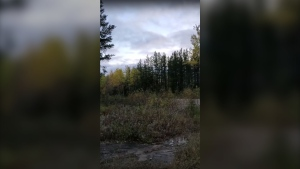 An Ontario hunter recorded a strange, loud, echoing howl in the woods that has left biologists scratching their heads. (Gino Meekis/YouTube)