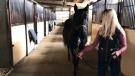 Calgary activists seek to save horses